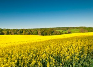 Biofuels