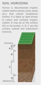 soil humus