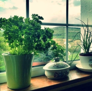 Herbs growing on windowsill